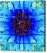 Blue Wallflower Abstract Acrylic Print