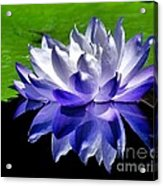 Blue Water Lily Reflection Acrylic Print
