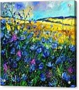 Blue Wild Chicorees Acrylic Print