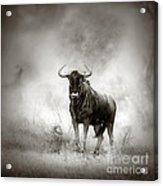 Blue Wildebeest In Rainstorm Acrylic Print
