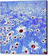 Blue With White Daisies Acrylic Print