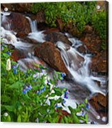 Bluebell Creek Acrylic Print