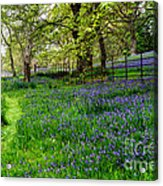 Bluebell Way Acrylic Print