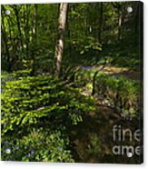 Bluebell Wood Acrylic Print