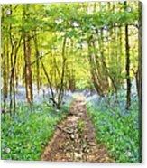 Bluebell Wood Watercolour Acrylic Print