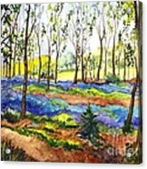 Bluebell Woods Acrylic Print