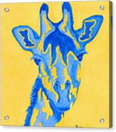Bluebelle Acrylic Print