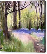 Bluebells At Dusk Acrylic Print