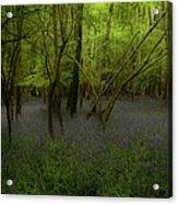 Bluebells Dream Acrylic Print by Peter Skelton