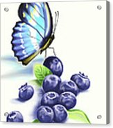 Blueberries And Butterfly Acrylic Print
