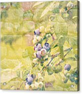 Blueberries Painted On The Wall Acrylic Print by Alanna DPhoto