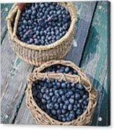 Blueberry Baskets Acrylic Print