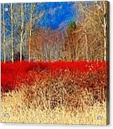 Blueberry Bushes In Winter Acrylic Print