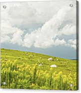 Blueberry Field And Goldenrod With Dramatic Sky In Maine Acrylic Print by Keith Webber Jr