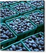 Blueberry Season In Maine Acrylic Print