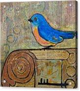 Bluebird Art - Knowledge Is Key Acrylic Print