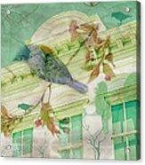 Bluebird Acrylic Print