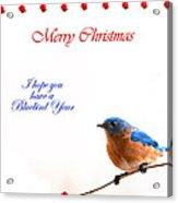 Bluebird Christmas Card Acrylic Print