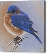 Bluebird In The Snow Acrylic Print