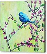 Bluebird Acrylic Print by Lauretta Curtis