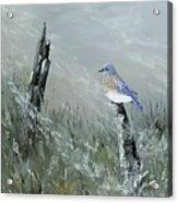 Bluebird On Post Acrylic Print