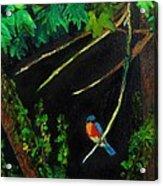 Bluebird Shimmer Acrylic Print