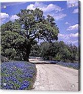 Bluebonnet Road Acrylic Print