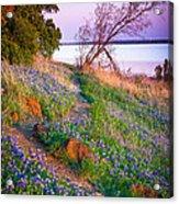 Bluebonnet Trail Acrylic Print