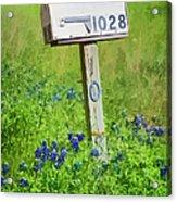 Bluebonnets And Mailbox Acrylic Print