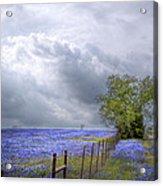 Bluebonnets And Spring Rain Acrylic Print