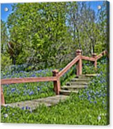 Bluebonnets And Stairs Acrylic Print