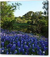 Bluebonnets By The Pond Acrylic Print
