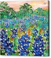 Bluebonnets Sunrise Acrylic Print