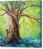 Bluebonnets Under The Oak Acrylic Print