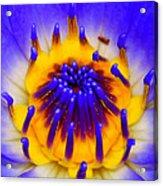 Blue Brilliance Acrylic Print