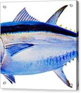 Bluefin Tuna Acrylic Print by Carey Chen