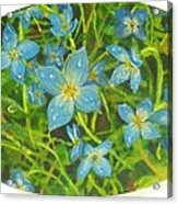 Bluets Of The Shenandoah  Acrylic Print