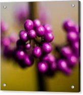 Blur Berries Acrylic Print