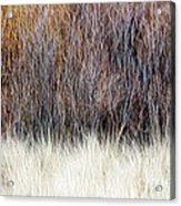 Blurred Brown Winter Woodland Background Acrylic Print