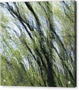 Blurred Trees Acrylic Print