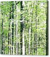 Blurred Trees Spring-1 Acrylic Print