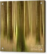 Blurred Trunks In A Forest Acrylic Print