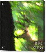 Blurry Buck Acrylic Print