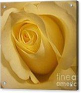 Blushing Cream Rose 3 Acrylic Print