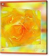 Blushing Yellow Rose Framed Acrylic Print
