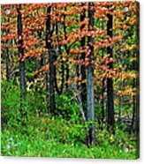 Blustery October Weather Acrylic Print