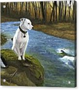 Bo At The Patapsco Acrylic Print