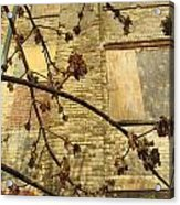 Boarded Windows And Branches Acrylic Print