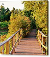 Boardwalk In A Forest, Magee Marsh Acrylic Print