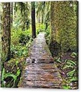 Boardwalk On The Rainforest Trail In Acrylic Print